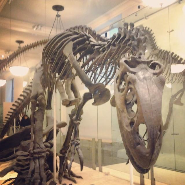 Ejemplo de T-Rex molón (@raquelsanchis)